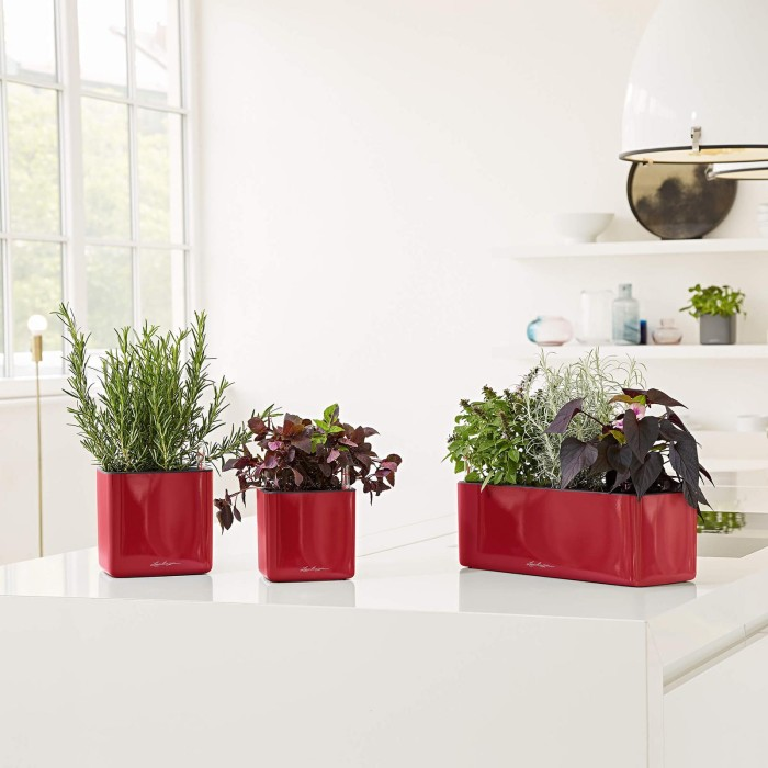 PACHET CADOU LECHUZA GLOSSY RED